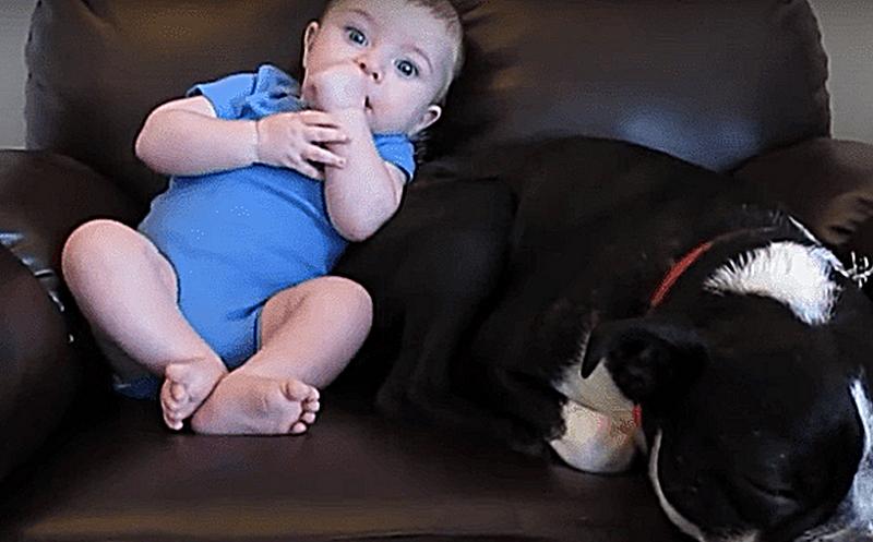 Почти 15 миллионов просмотров! Смешная реакция собаки покарила интернет!