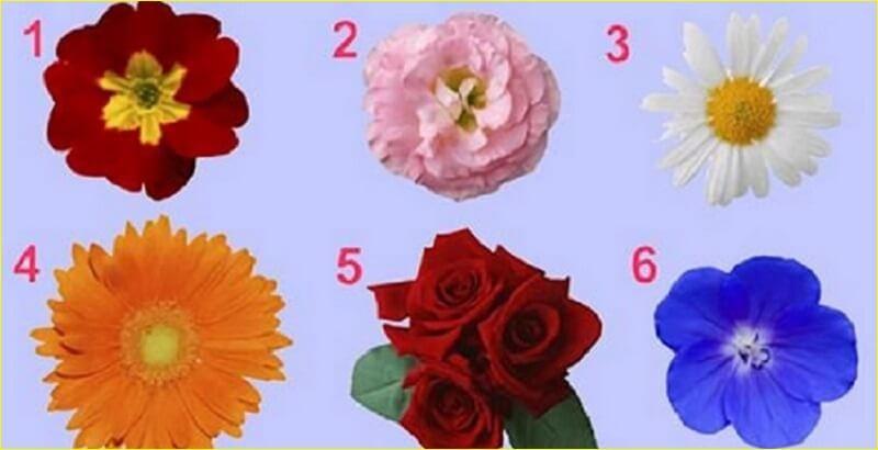 Выбери цветок, и узнай про себя кое-что интересненькое!