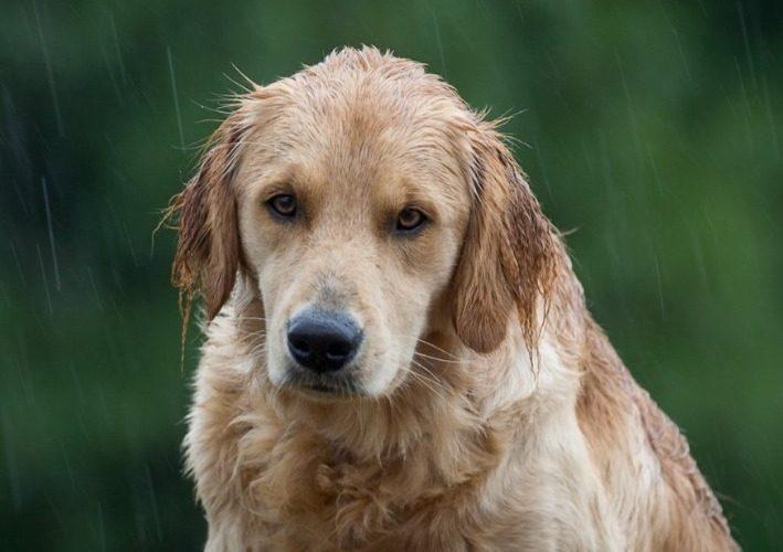 Собака 10 дней ждала своего хозяина, но он так и не пришел